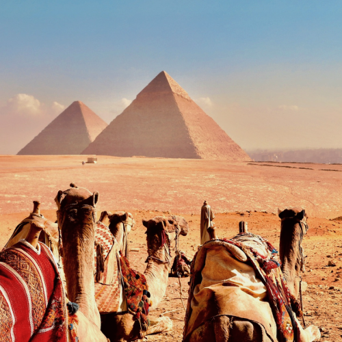 Egypt - Camels at the Pyramids